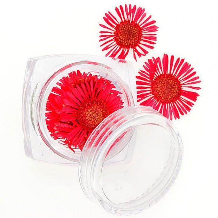 Сухоцветы для дизайна и украшения ногтей №76