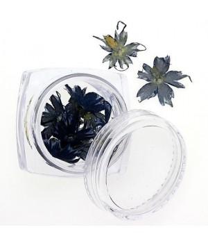 Сухоцветы для дизайна ногтей №78