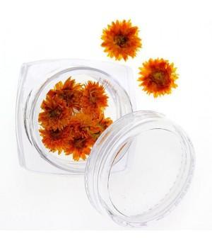Сухоцветы для дизайна ногтей №79