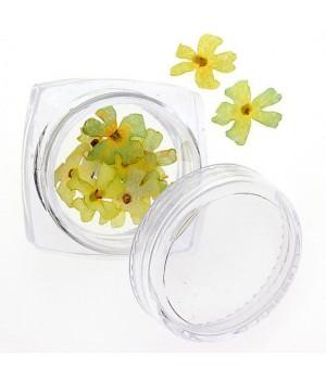 Сухоцветы для дизайна ногтей №82