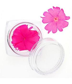 Сухоцветы для дизайна ногтей №86