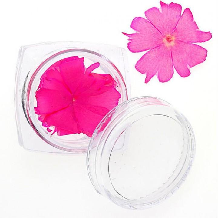 Сухоцветы для дизайна и украшения ногтей №86