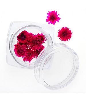 Сухоцветы для дизайна ногтей №91