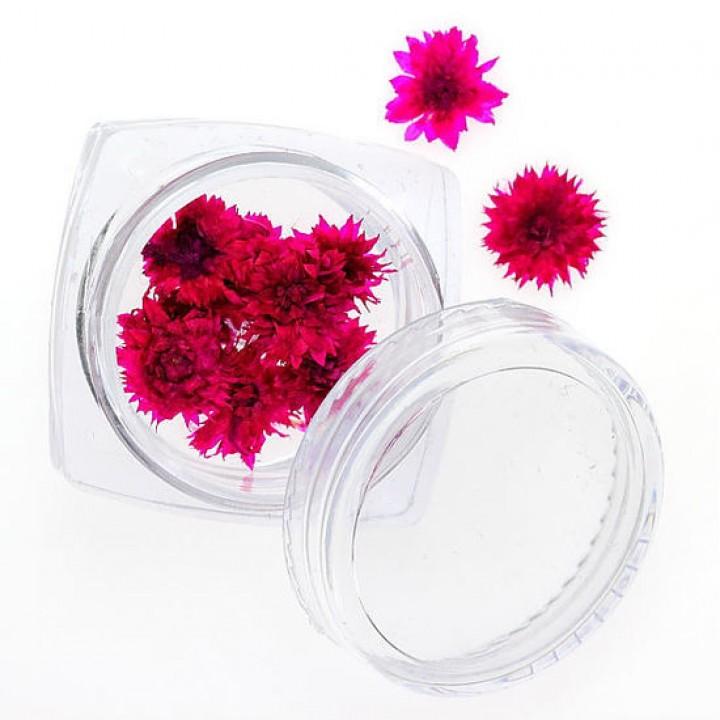 Сухоцветы для дизайна и украшения ногтей №91