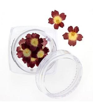 Сухоцветы для дизайна ногтей №92