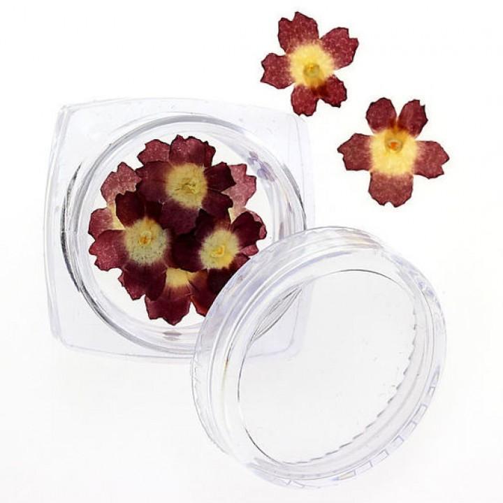 Сухоцветы для дизайна и украшения ногтей №92