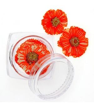 Сухоцветы для дизайна ногтей №93