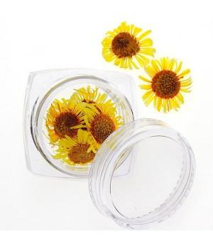 Сухоцветы для дизайна ногтей №96