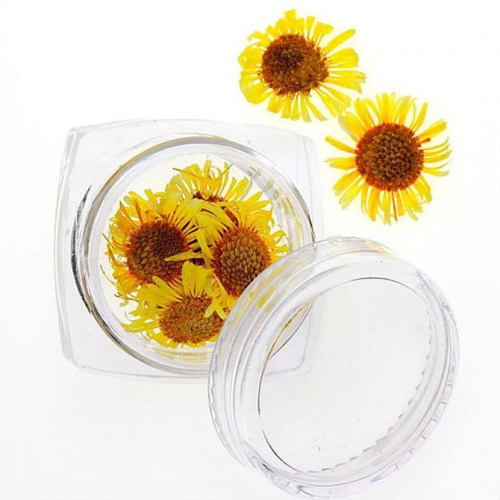 Сухоцветы для дизайна и украшения ногтей №96