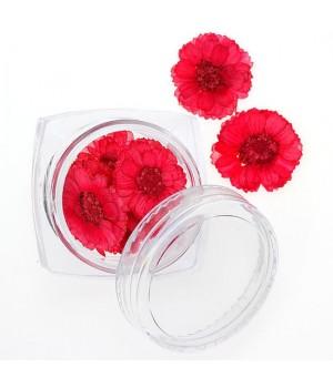Сухоцветы для дизайна ногтей №98