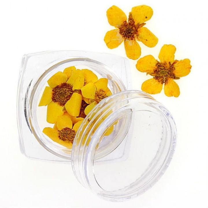 Сухоцветы для дизайна и украшения ногтей №101