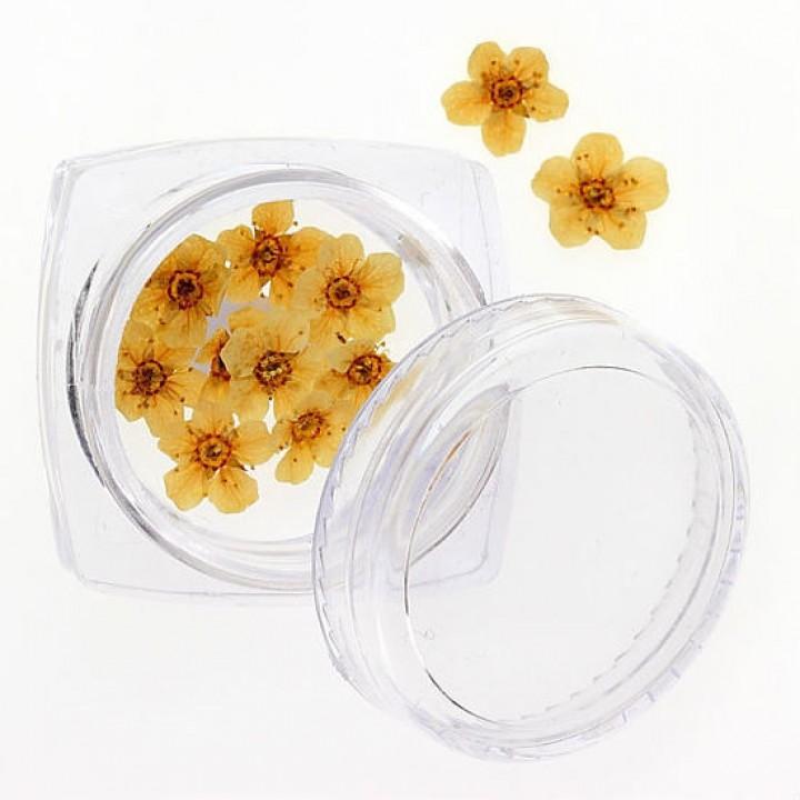 Сухоцветы для дизайна и украшения ногтей №105