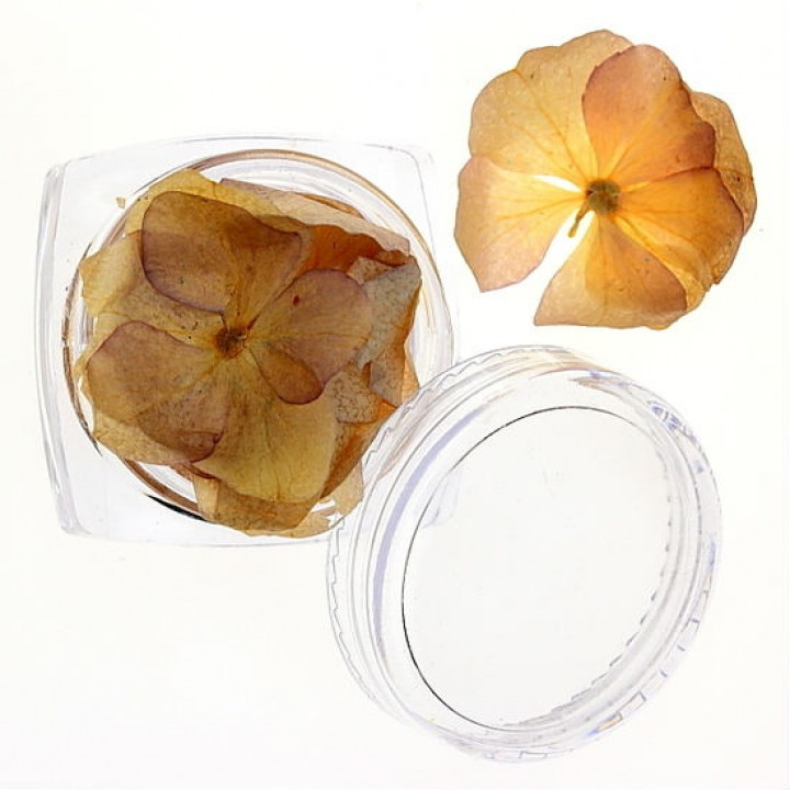 Сухоцветы для дизайна и украшения ногтей №26