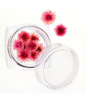 Сухоцветы для дизайна ногтей №31