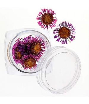 Сухоцветы для дизайна ногтей №32