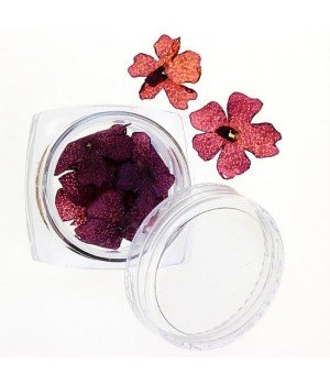 Сухоцветы для дизайна ногтей №33