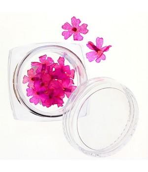 Сухоцветы для дизайна ногтей №37