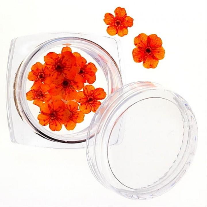 Сухоцветы для дизайна и украшения ногтей №38