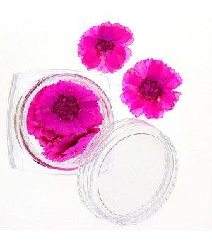 Сухоцветы для дизайна ногтей №42