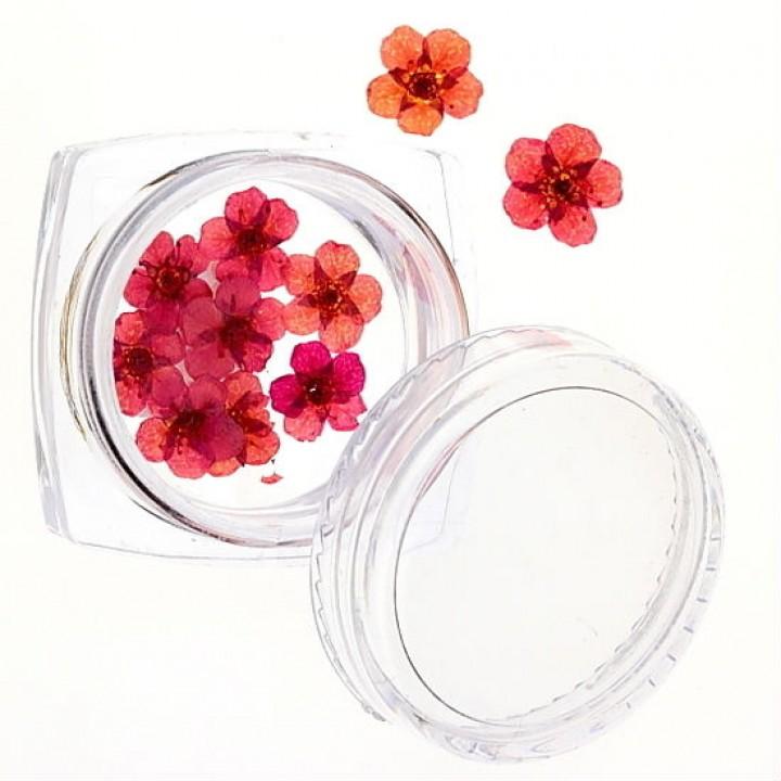 Сухоцветы для дизайна и украшения ногтей №47
