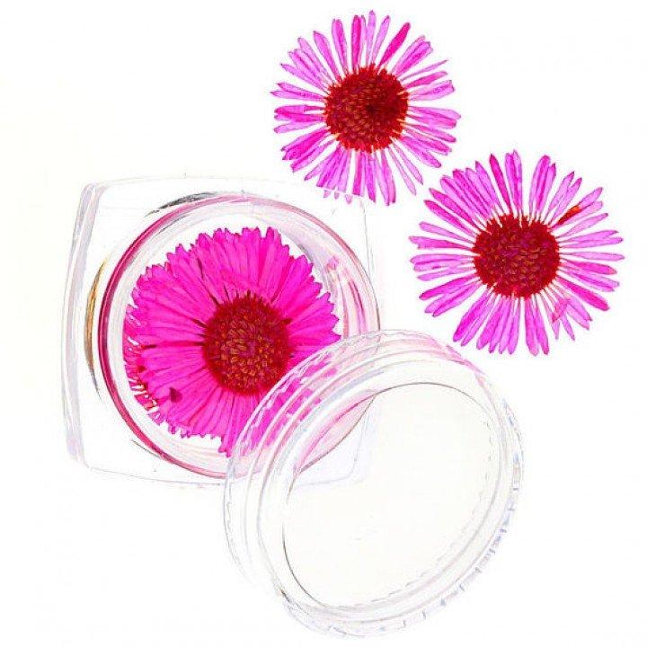 Сухоцветы для дизайна и украшения ногтей №58