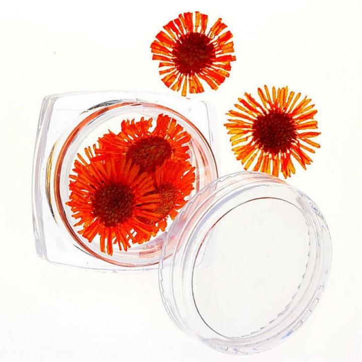 Сухоцветы для дизайна и украшения ногтей №65
