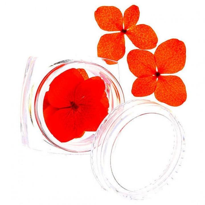Сухоцветы для дизайна и украшения ногтей №70