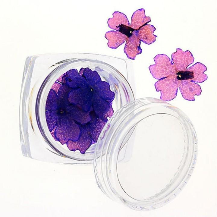 Сухоцветы для дизайна и украшения ногтей №71